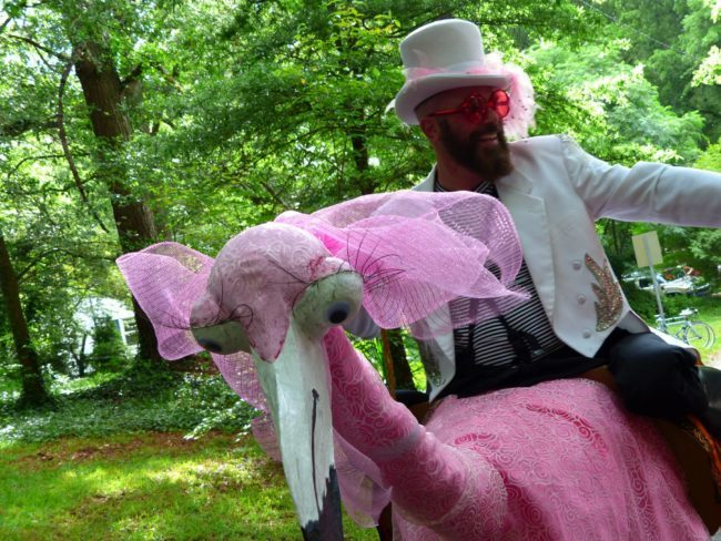 Thunder | Flamingo Character | Ringmaster | Performer | Imagine Circus | Cirque | Raleigh, NC